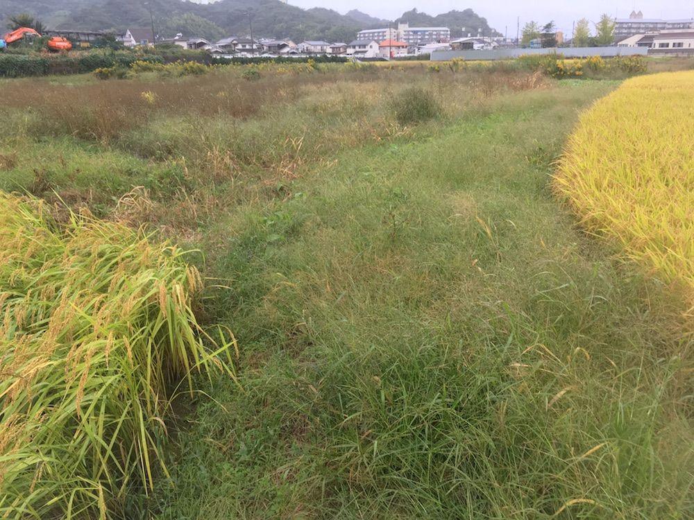 愛媛の農道